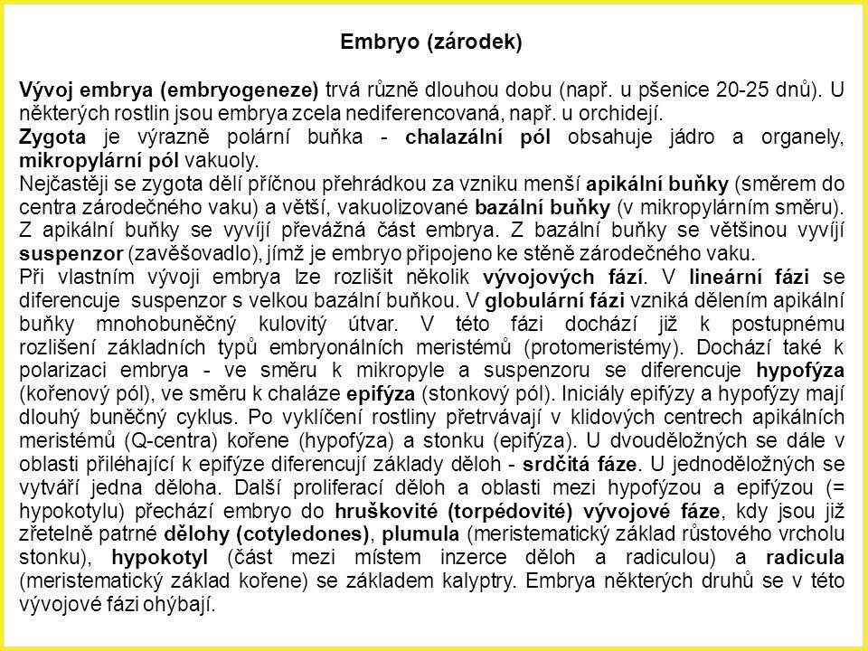 Embryo (zárodek)