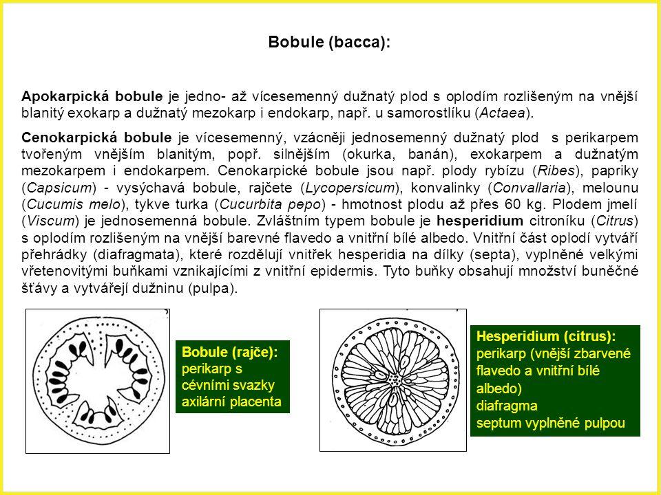 Bobule (bacca):