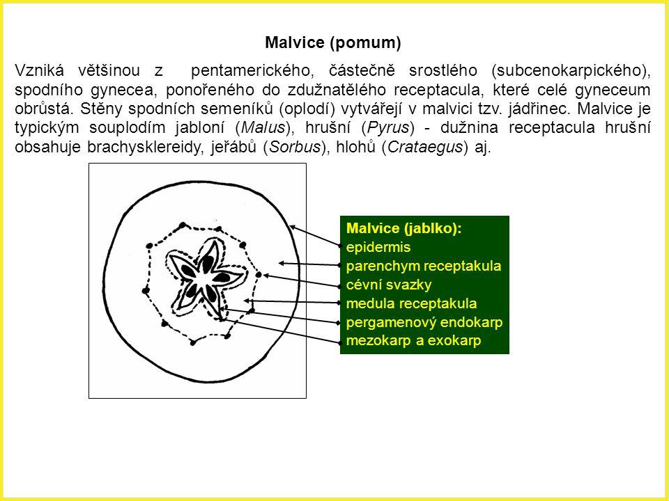 Malvice (pomum)