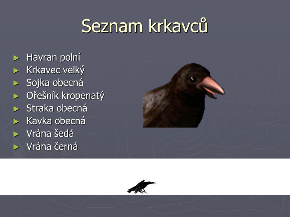 Seznam krkavců Havran polní Krkavec velký Sojka obecná