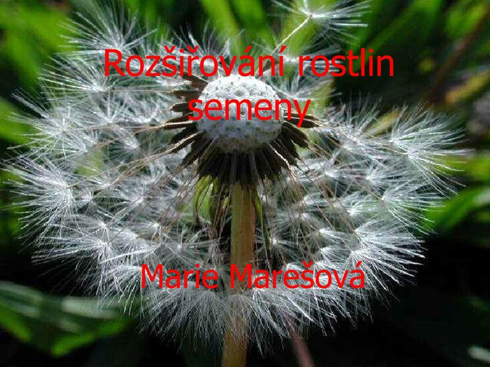 Rozšiřování rostlin semeny