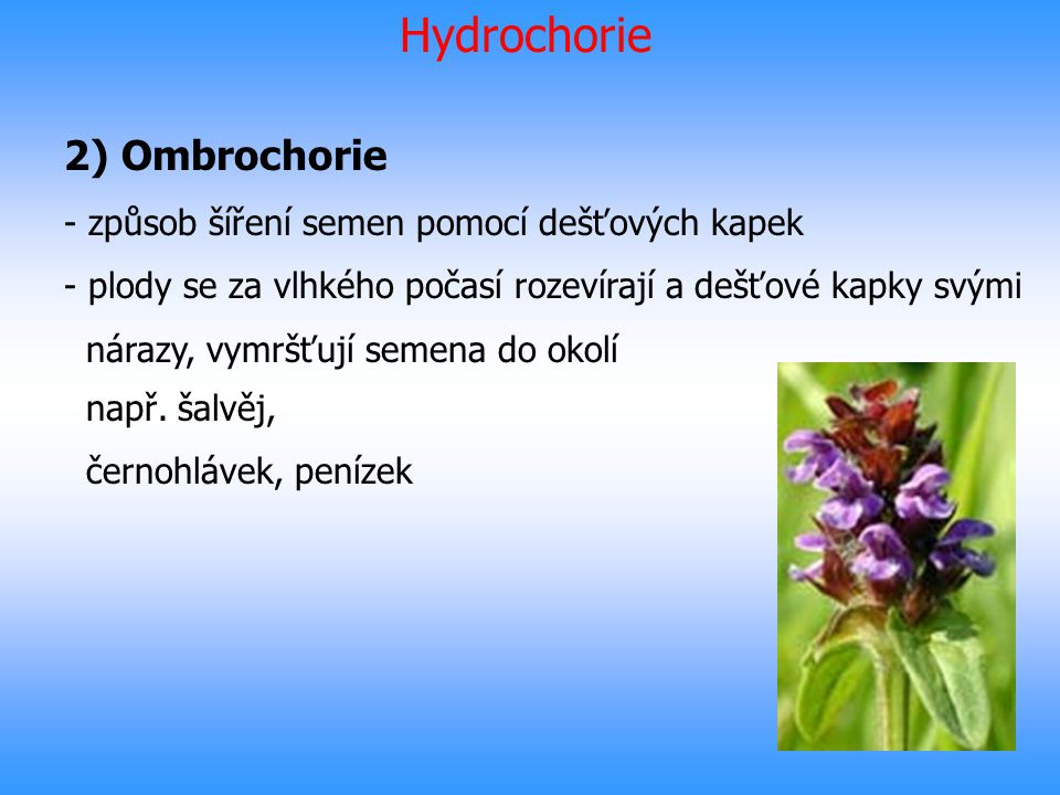 Hydrochorie 2) Ombrochorie způsob šíření semen pomocí dešťových kapek