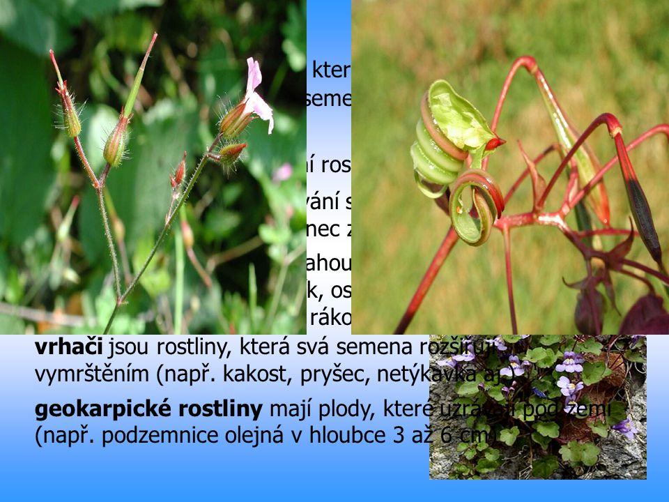 Autochorie je rozšiřování rostlin vlastními silami