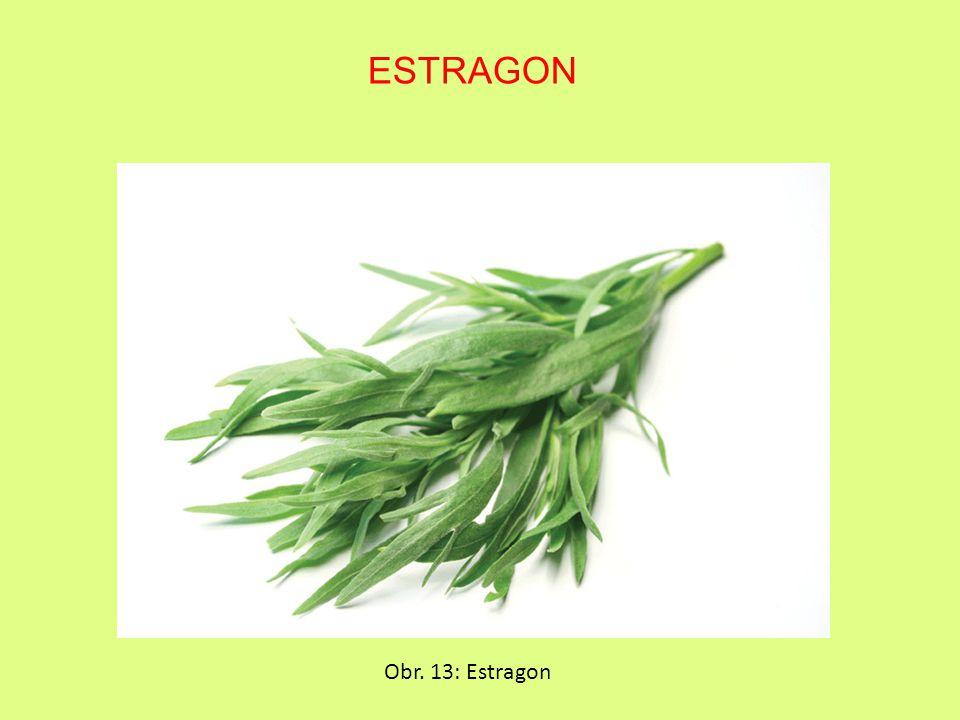 ESTRAGON Obr. 13: Estragon