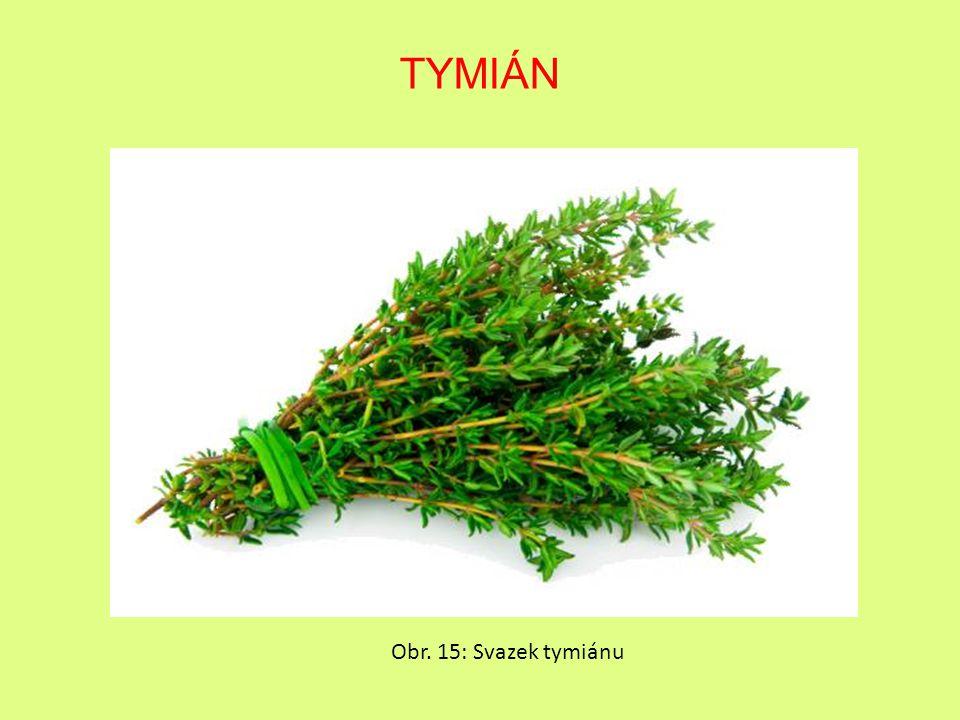 TYMIÁN Obr. 15: Svazek tymiánu