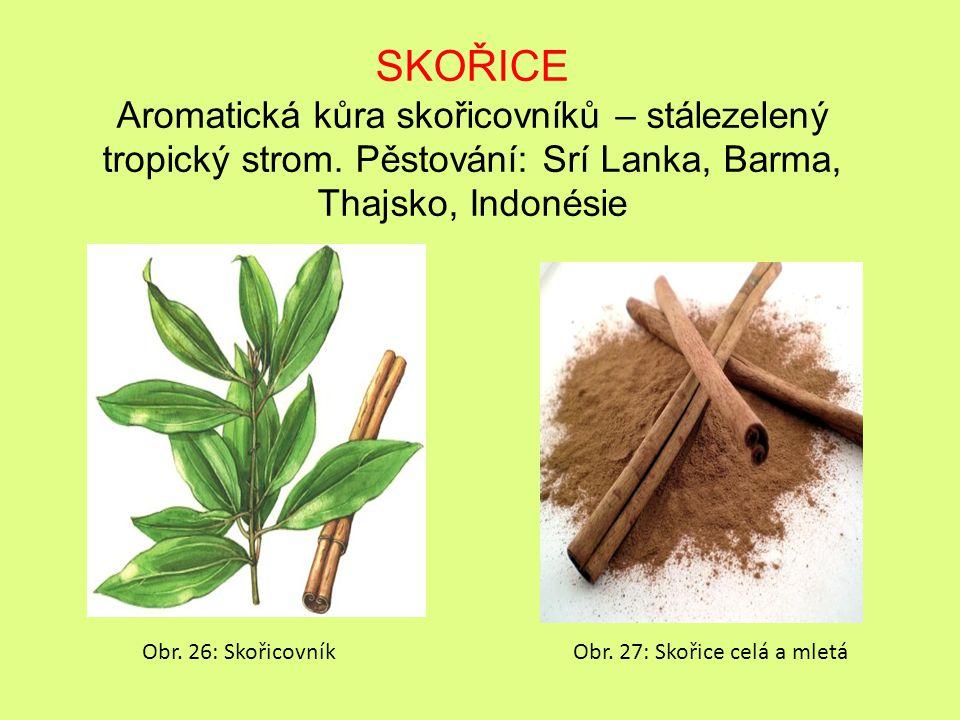 SKOŘICE Aromatická kůra skořicovníků – stálezelený tropický strom. Pěstování: Srí Lanka, Barma, Thajsko, Indonésie.