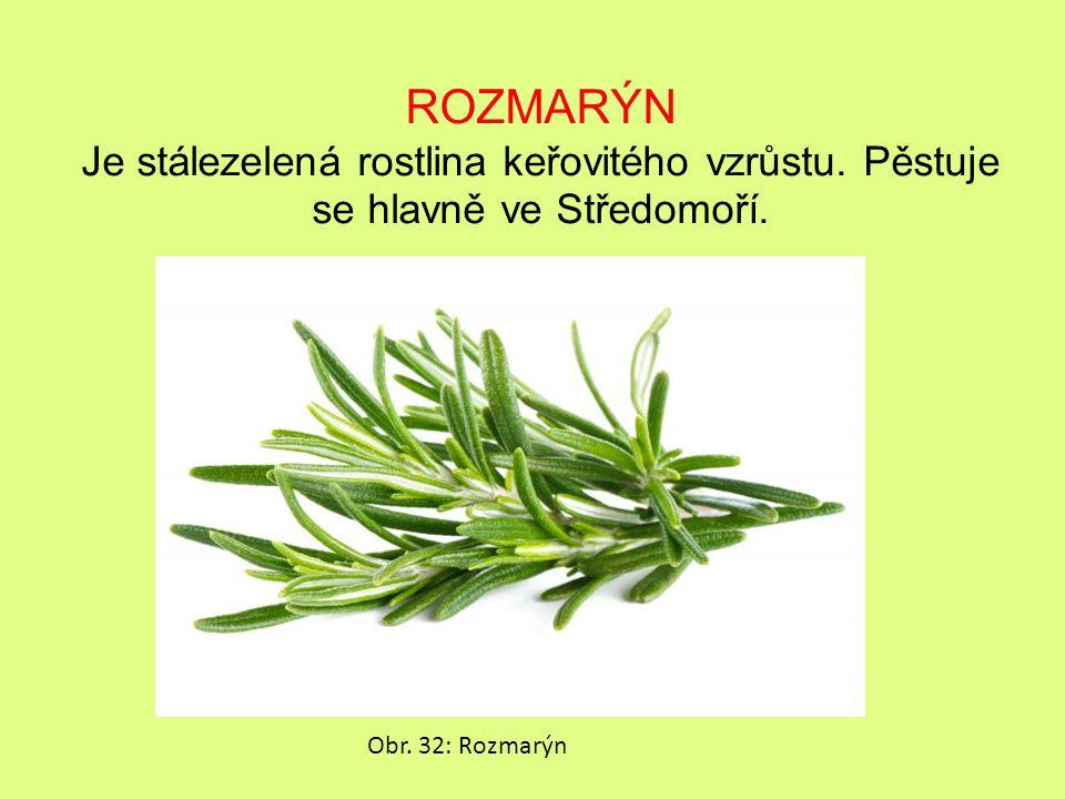 ROZMARÝN Je stálezelená rostlina keřovitého vzrůstu.