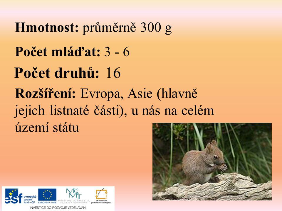 Počet druhů: 16 Hmotnost: průměrně 300 g Počet mláďat: 3 - 6
