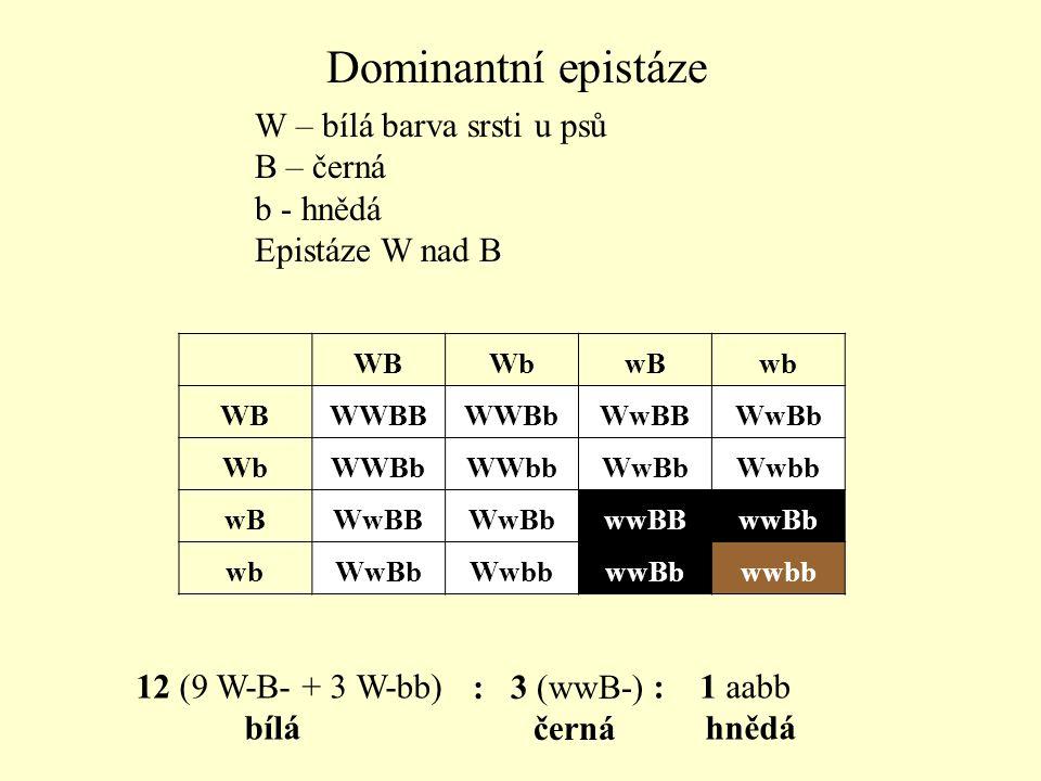 Dominantní epistáze W – bílá barva srsti u psů B – černá b - hnědá