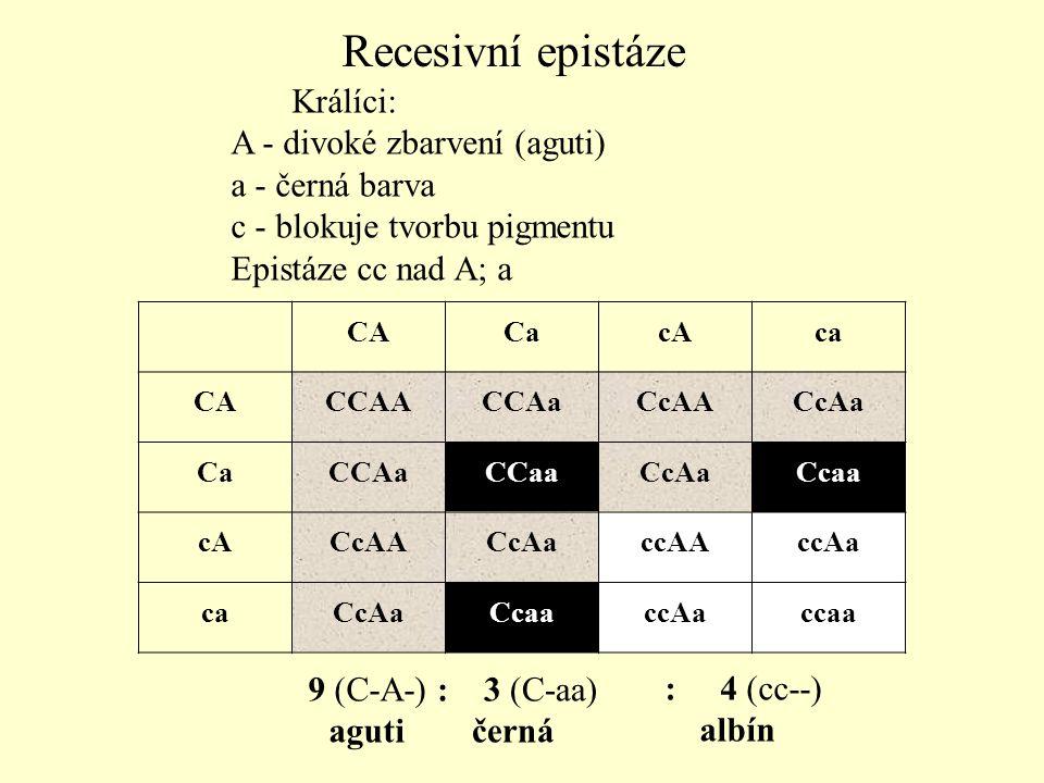 Recesivní epistáze Králíci: A - divoké zbarvení (aguti)
