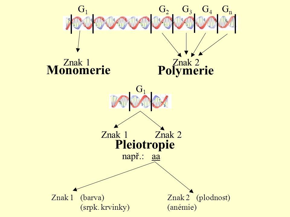 Monomerie Polymerie Pleiotropie G1 G2 G3 G4 Gn Znak 1 Znak 2 G1
