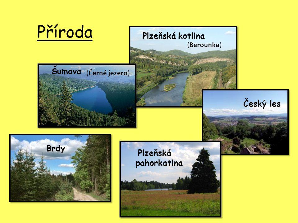 Příroda Plzeňská kotlina Šumava Český les Brdy (Berounka)