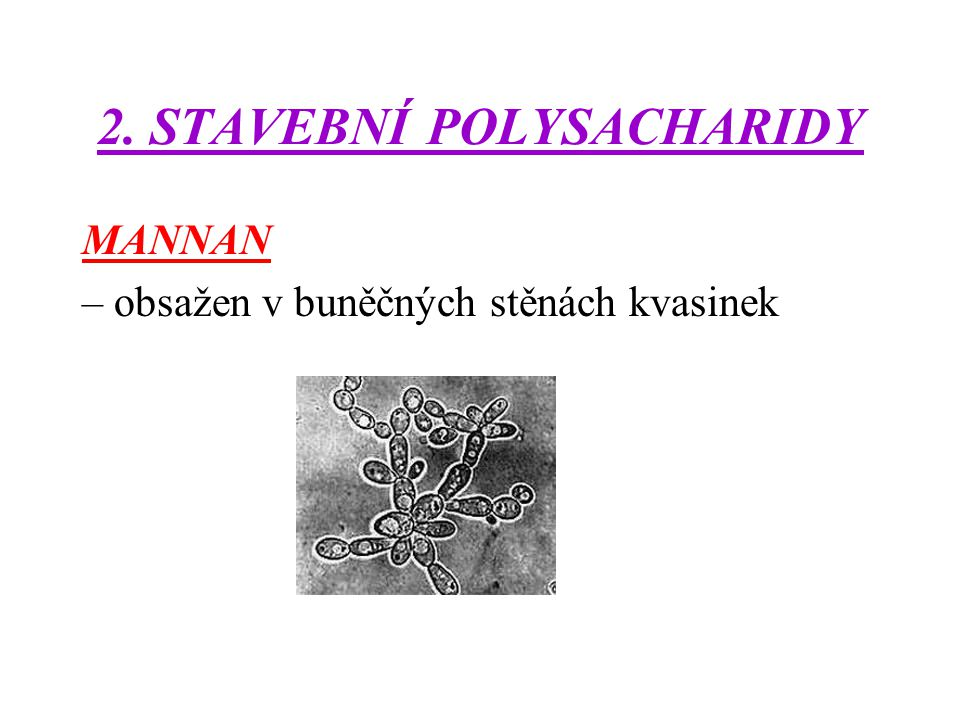 2. STAVEBNÍ POLYSACHARIDY