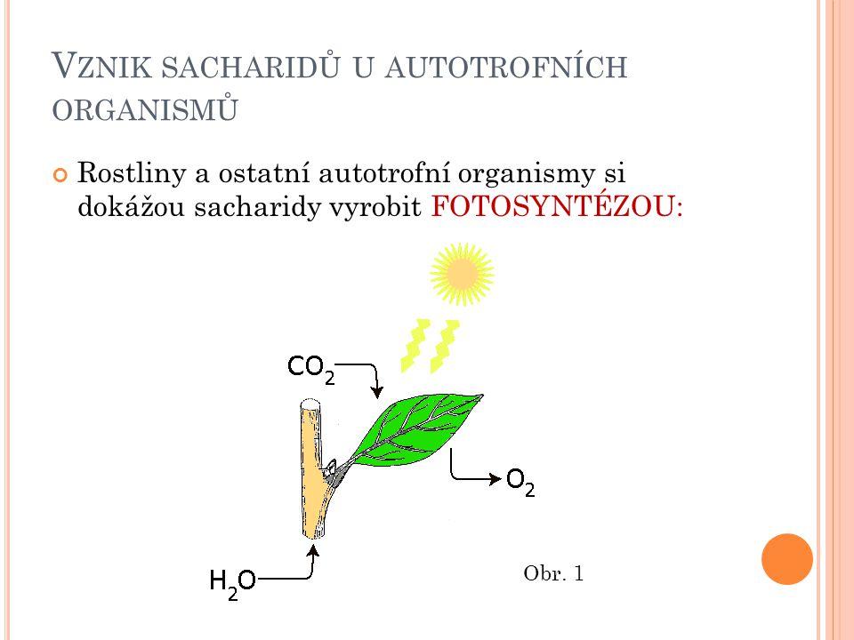 Vznik sacharidů u autotrofních organismů