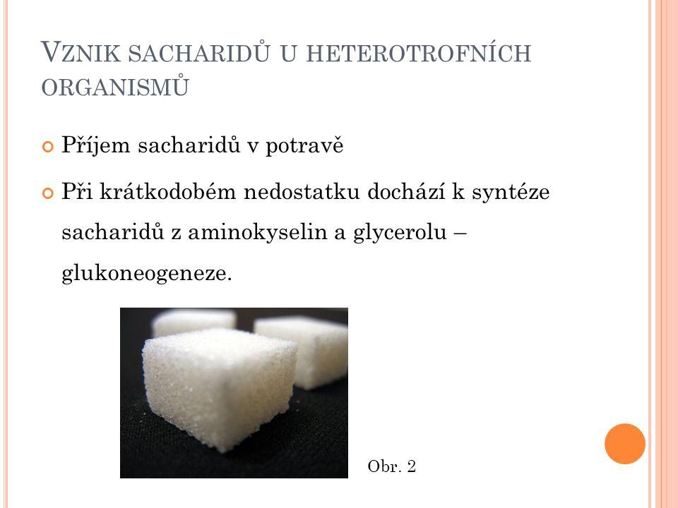 Vznik sacharidů u heterotrofních organismů