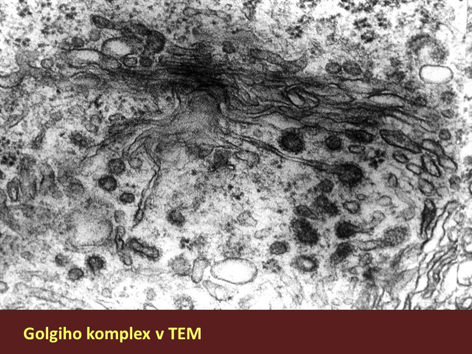 Golgiho komplex v TEM