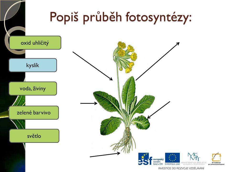Popiš průběh fotosyntézy: