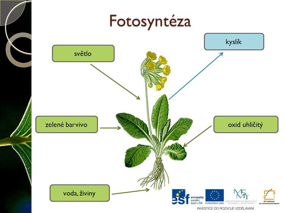 Fotosyntéza kyslík světlo zelené barvivo oxid uhličitý voda, živiny