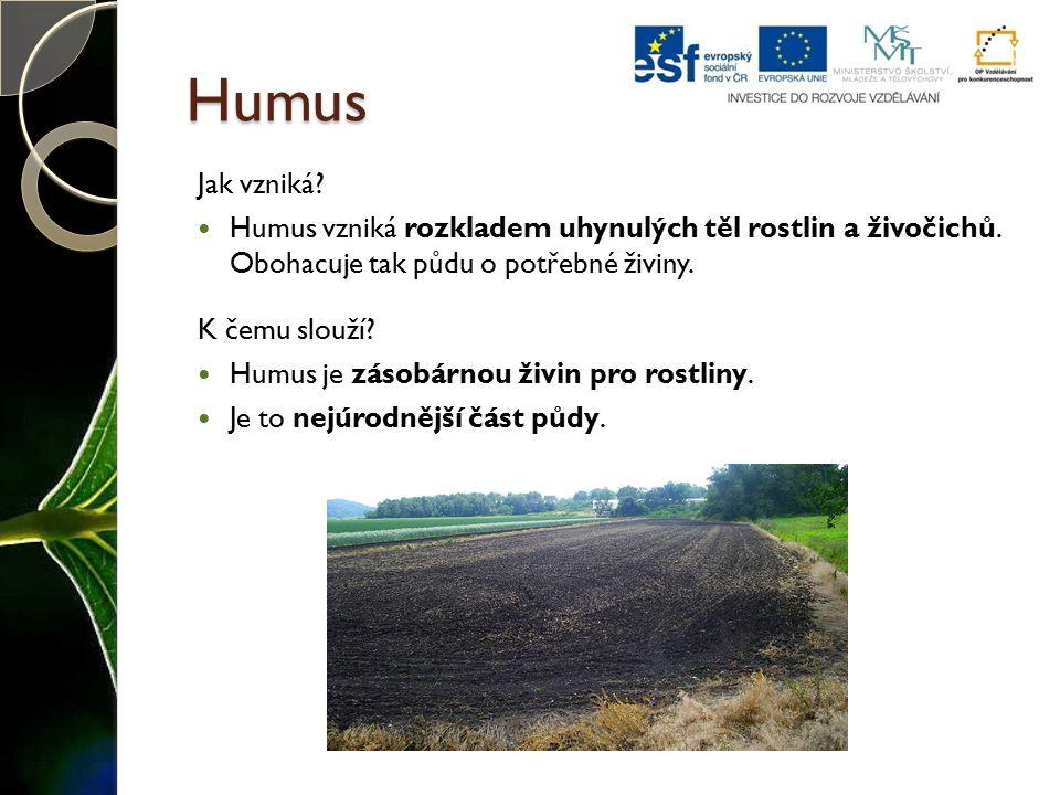 Humus Jak vzniká Humus vzniká rozkladem uhynulých těl rostlin a živočichů. Obohacuje tak půdu o potřebné živiny.