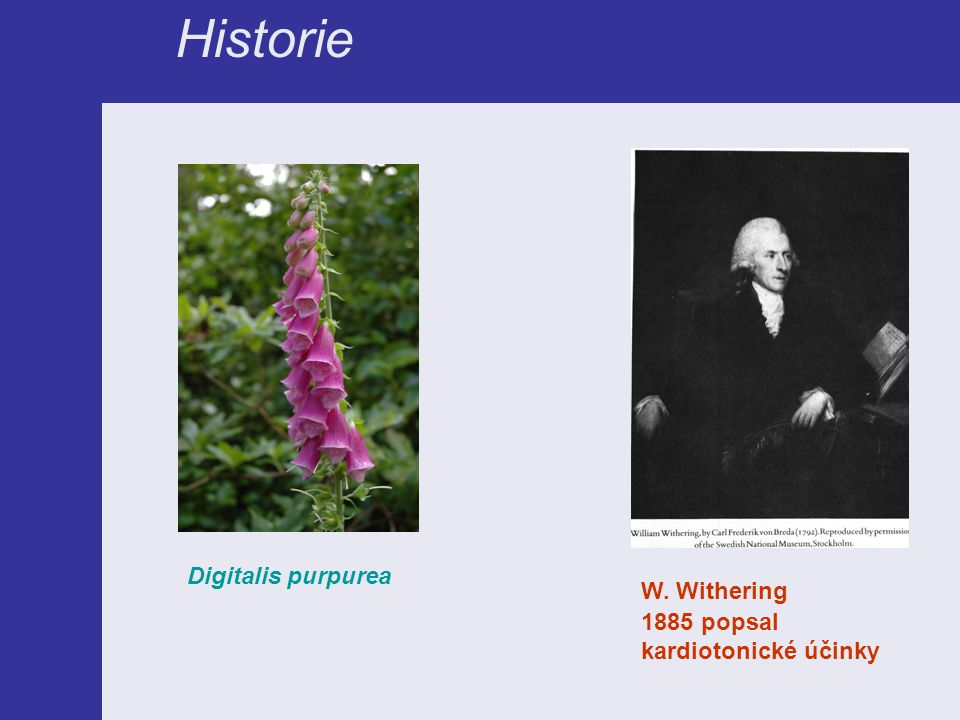 Historie Digitalis purpurea W. Withering