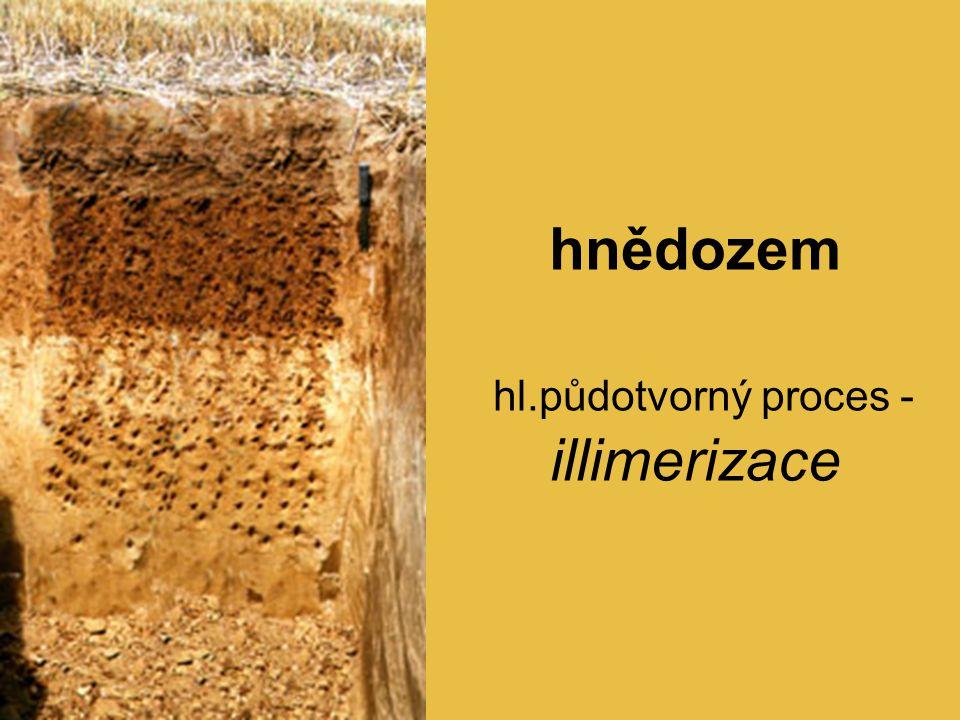 hnědozem hl.půdotvorný proces - illimerizace