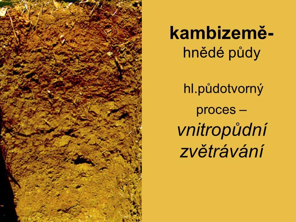 kambizemě- hnědé půdy hl.půdotvorný proces – vnitropůdní zvětrávání