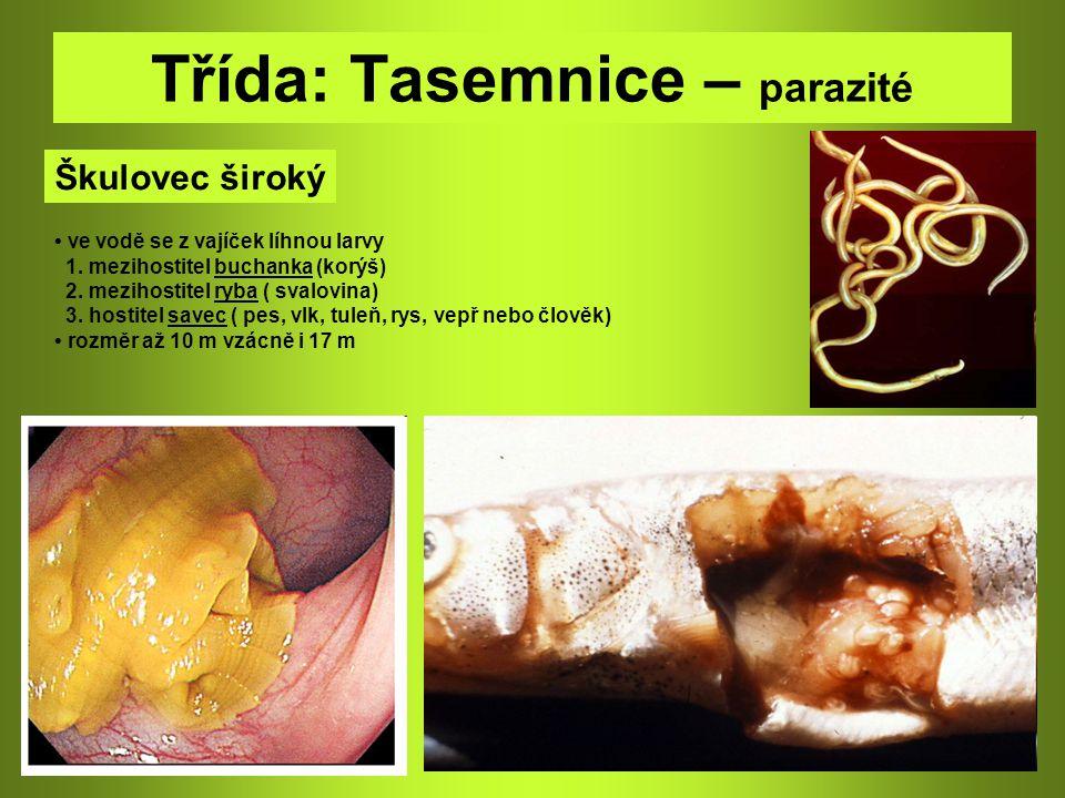 Třída: Tasemnice – parazité