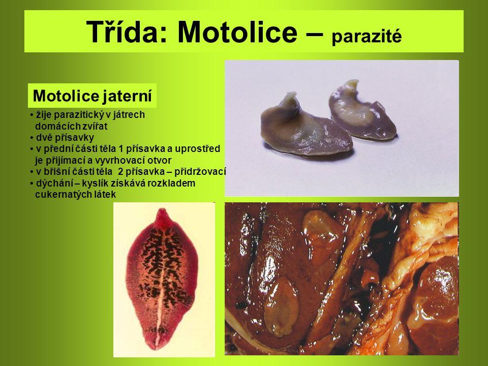 Třída: Motolice – parazité