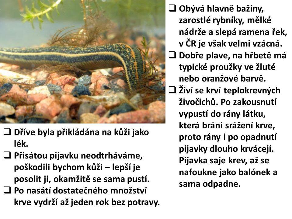Obývá hlavně bažiny, zarostlé rybníky, mělké nádrže a slepá ramena řek, v ČR je však velmi vzácná.