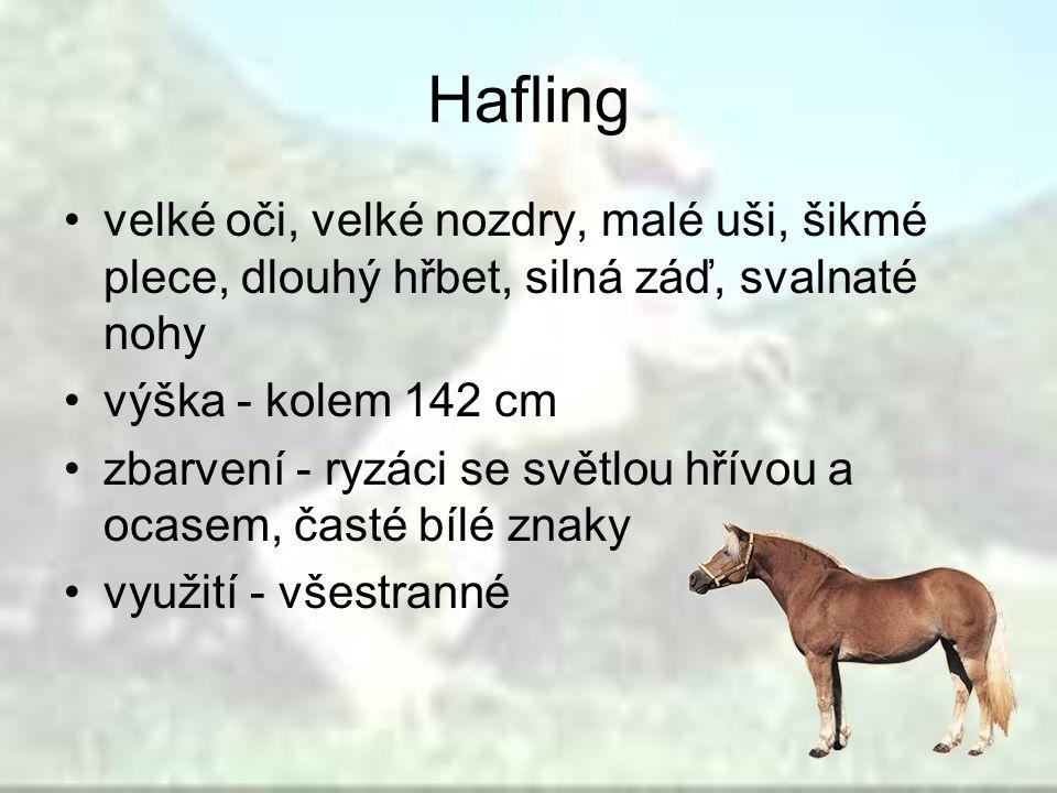 Hafling velké oči, velké nozdry, malé uši, šikmé plece, dlouhý hřbet, silná záď, svalnaté nohy. výška - kolem 142 cm.