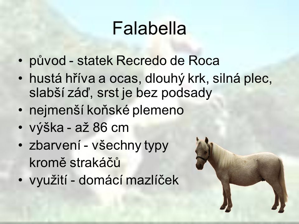 Falabella původ - statek Recredo de Roca