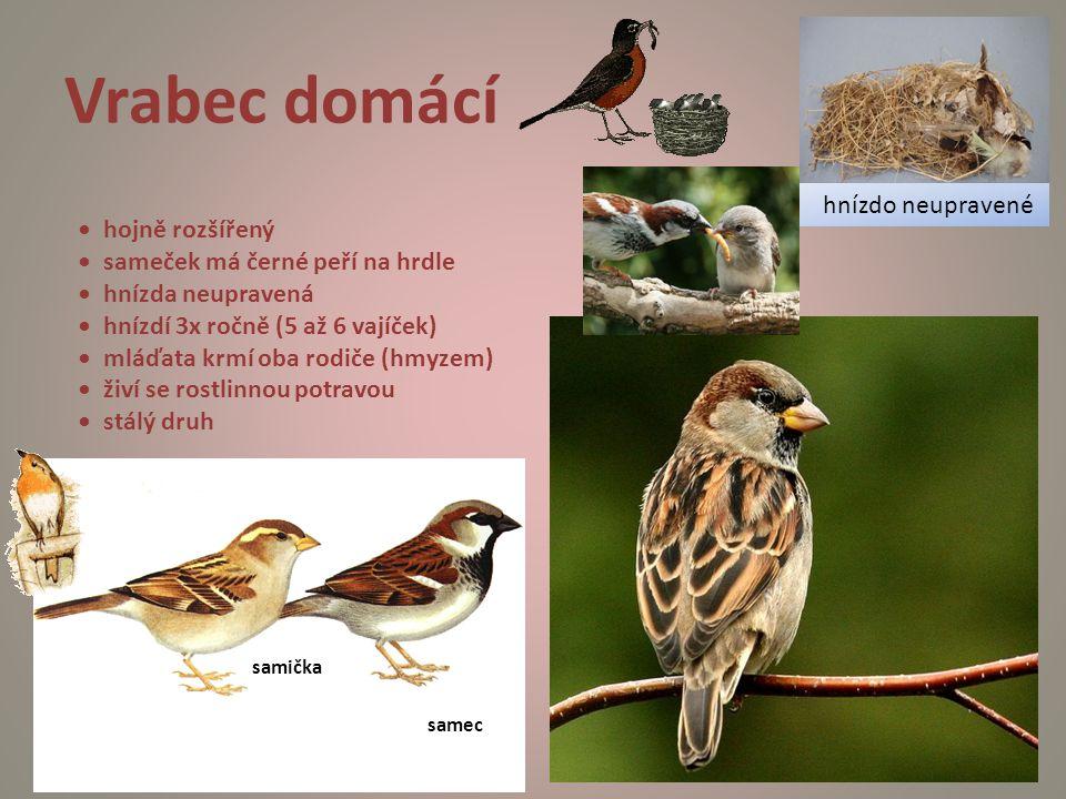 Vrabec domácí hnízdo neupravené • hojně rozšířený