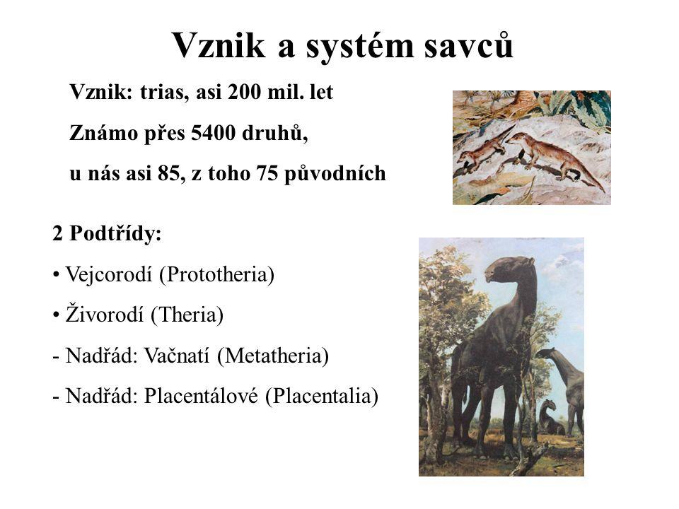 Vznik a systém savců Vznik: trias, asi 200 mil. let
