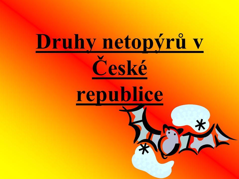 Druhy netopýrů v České republice