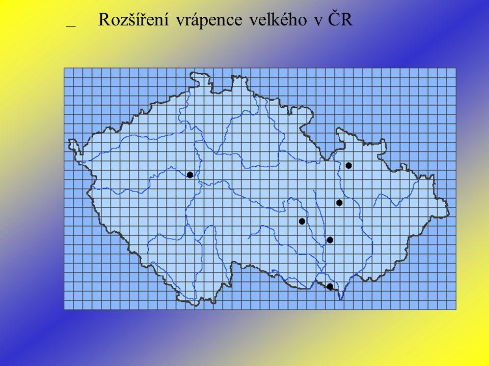 Rozšíření vrápence velkého v ČR