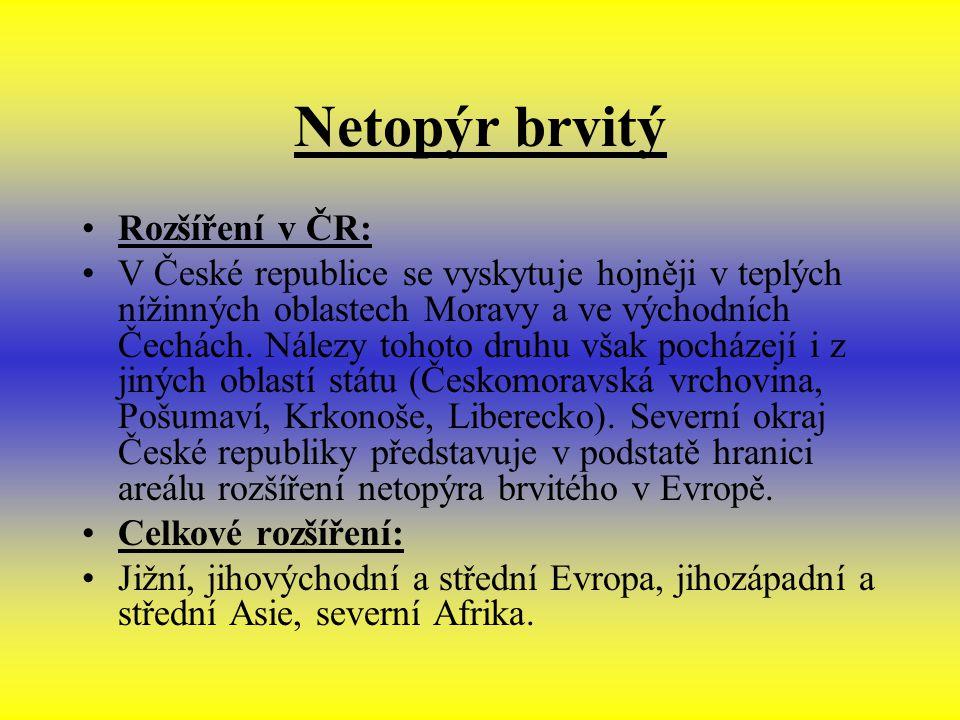 Netopýr brvitý Rozšíření v ČR: