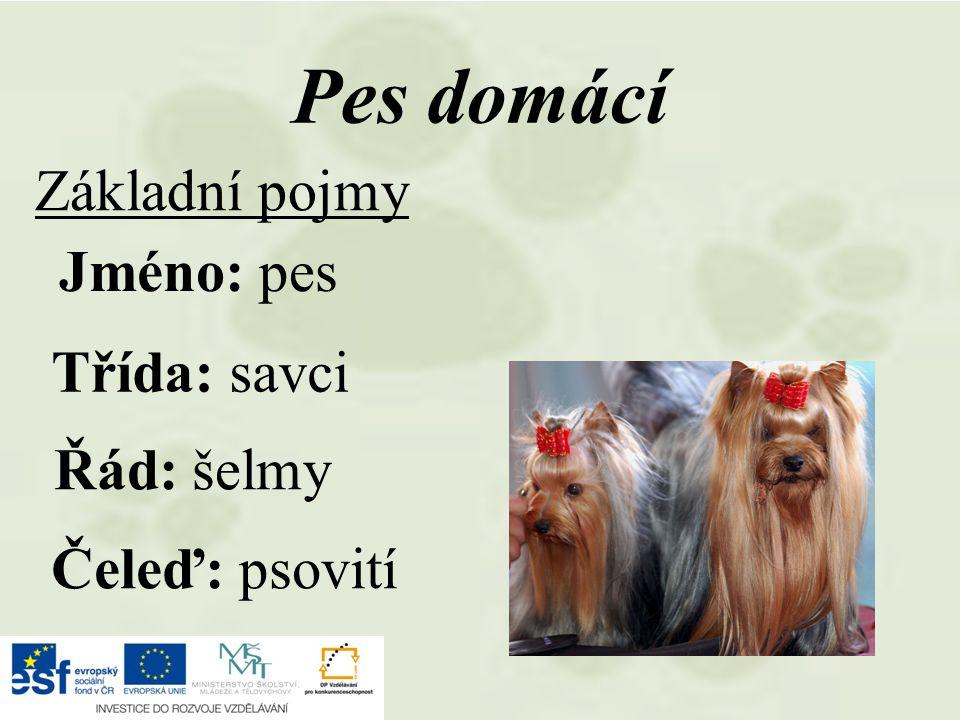 Pes domácí Základní pojmy Jméno: pes Třída: savci Řád: šelmy
