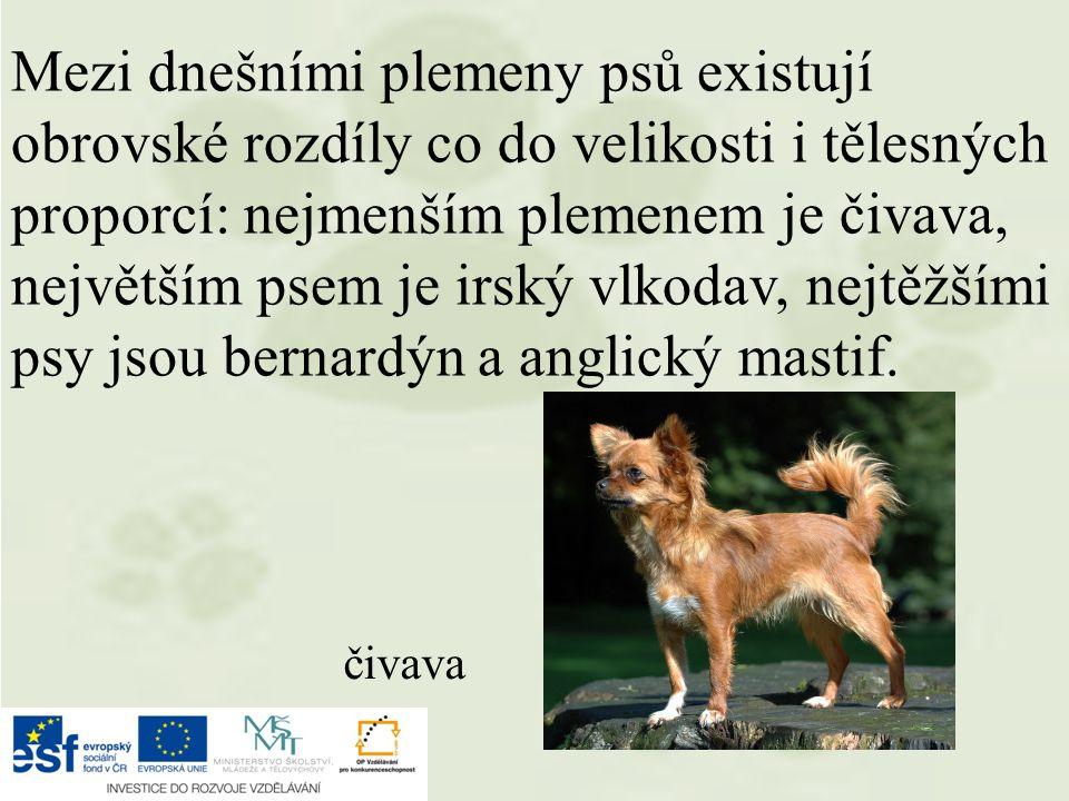 Mezi dnešními plemeny psů existují obrovské rozdíly co do velikosti i tělesných proporcí: nejmenším plemenem je čivava, největším psem je irský vlkodav, nejtěžšími psy jsou bernardýn a anglický mastif.