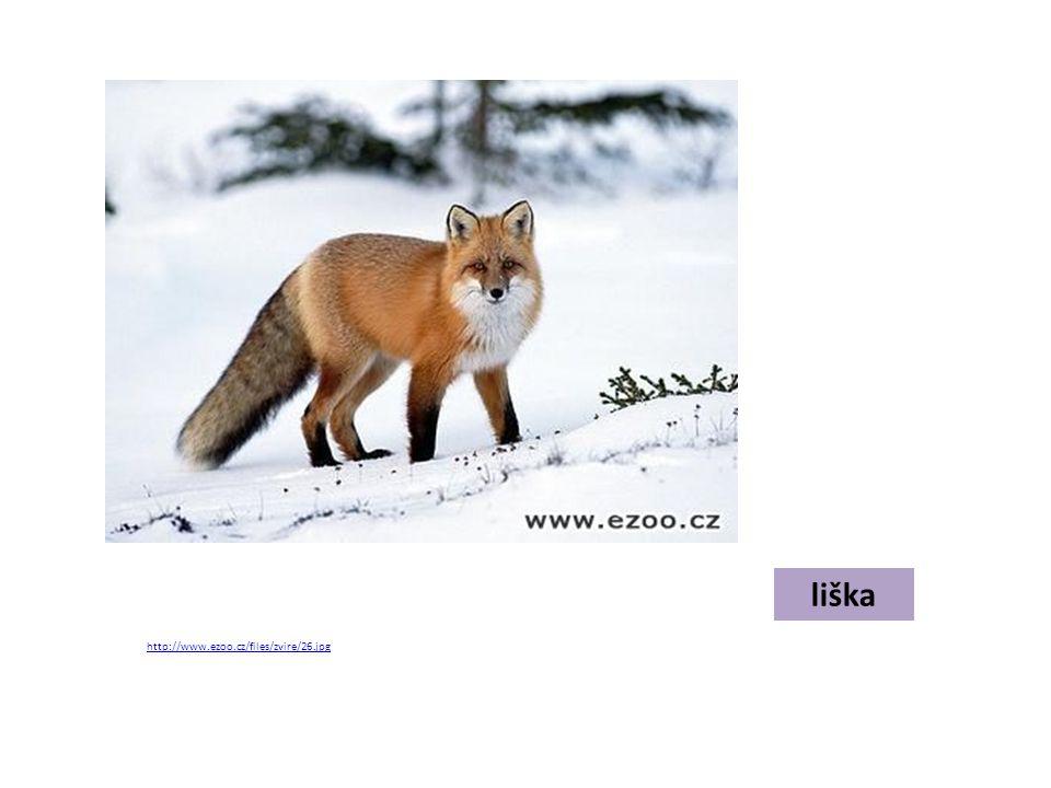 liška http://www.ezoo.cz/files/zvire/26.jpg