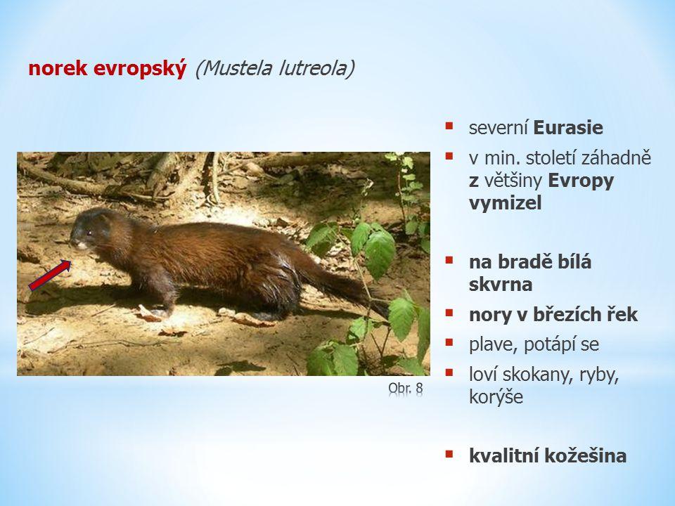 norek evropský (Mustela lutreola)