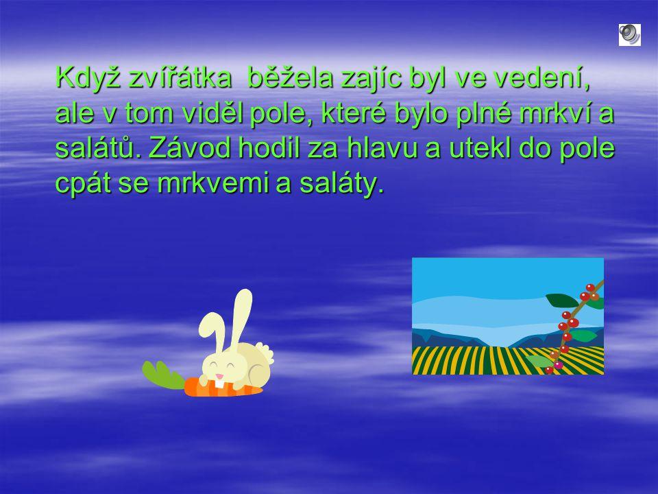 Když zvířátka běžela zajíc byl ve vedení, ale v tom viděl pole, které bylo plné mrkví a salátů.