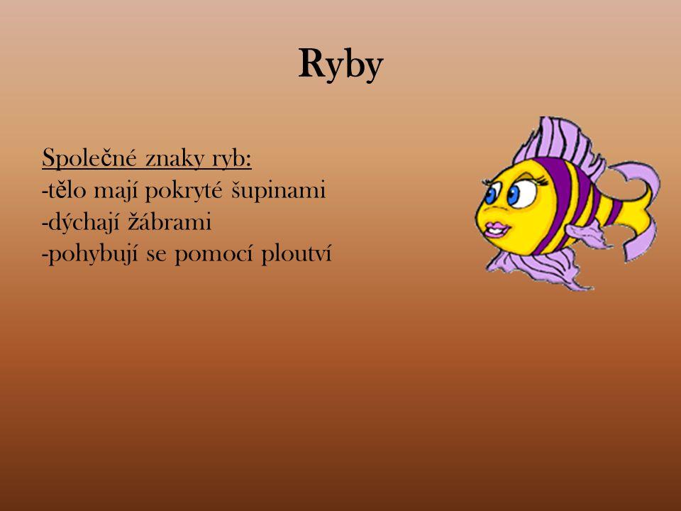 Ryby Společné znaky ryb: -tělo mají pokryté šupinami dýchají žábrami