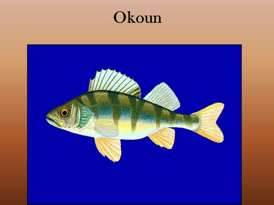 Okoun