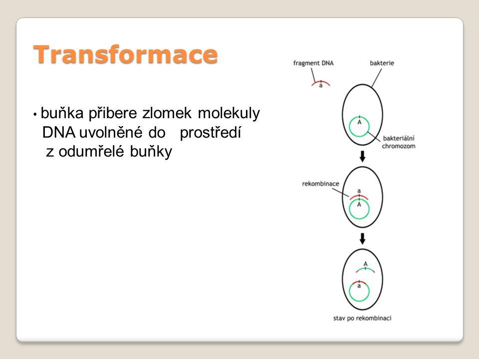 Transformace DNA uvolněné do prostředí z odumřelé buňky