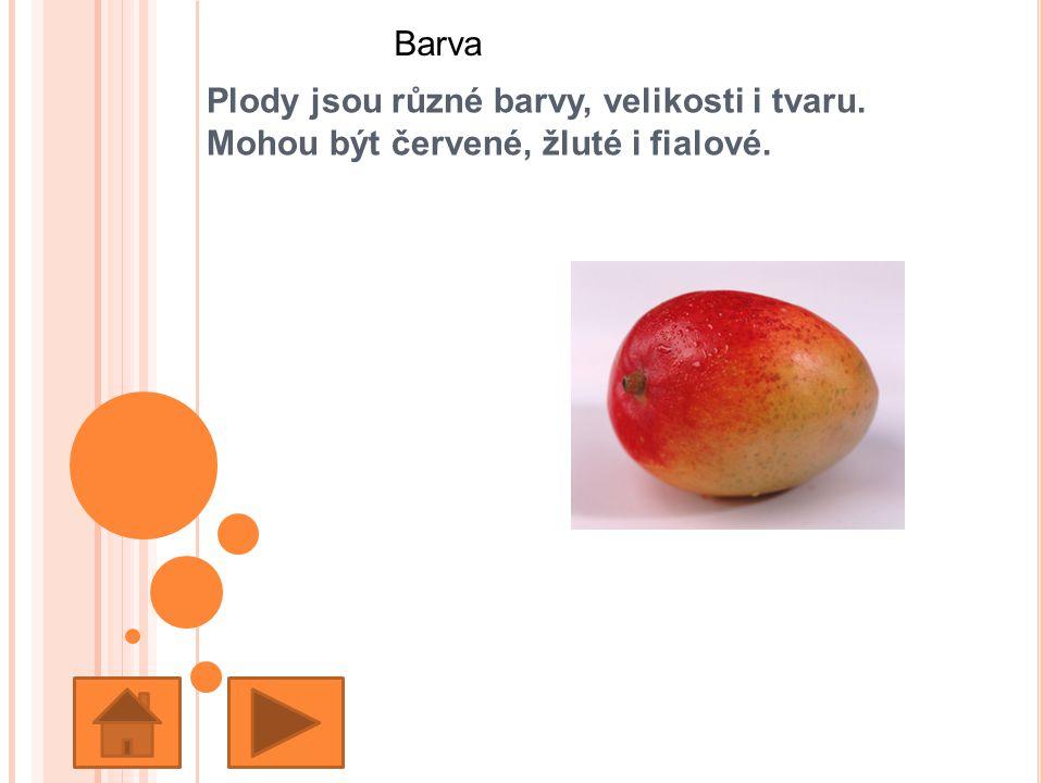 Barva Plody jsou různé barvy, velikosti i tvaru. Mohou být červené, žluté i fialové.