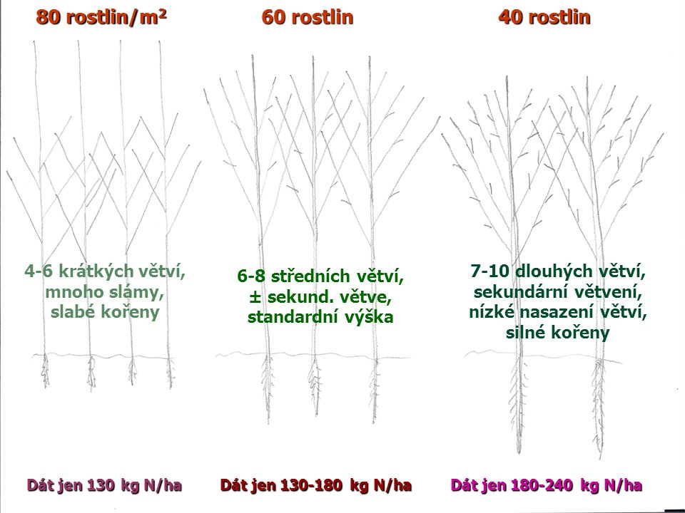 80 rostlin/m2 60 rostlin 40 rostlin