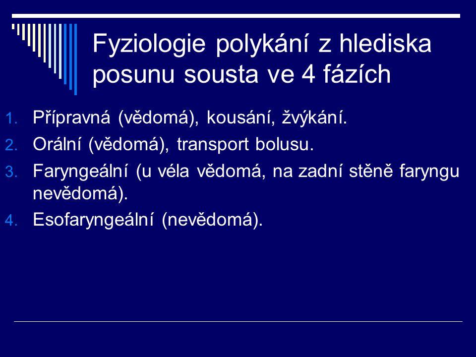Fyziologie polykání z hlediska posunu sousta ve 4 fázích