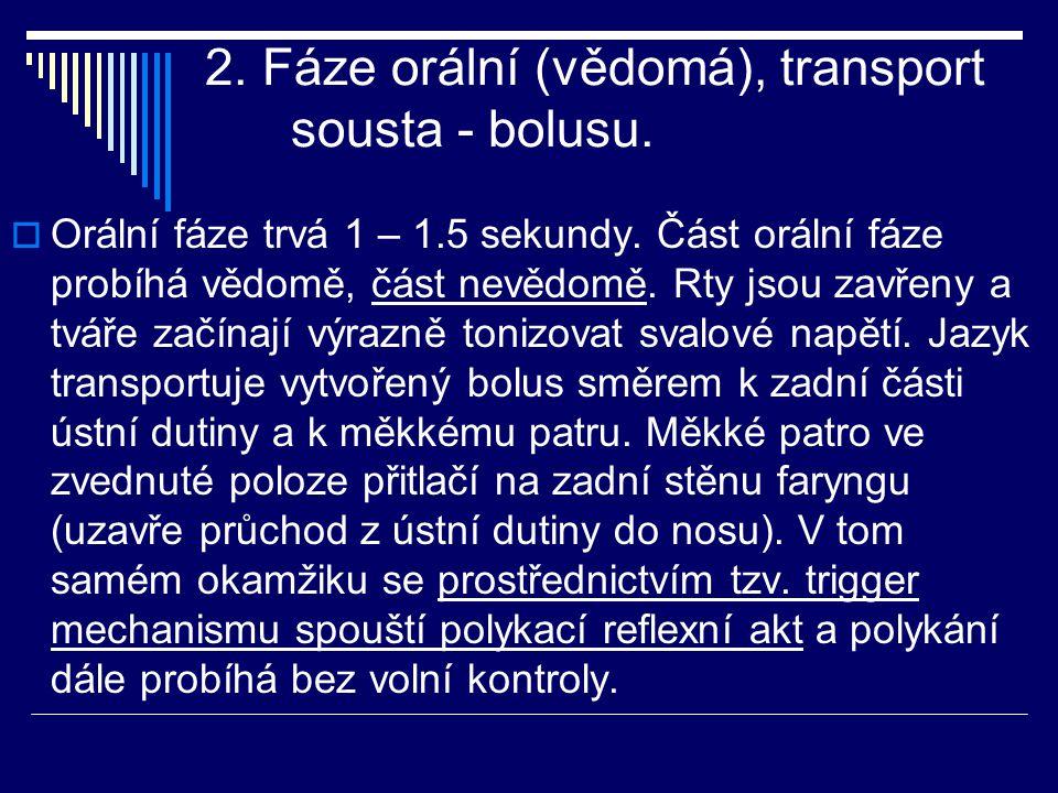 2. Fáze orální (vědomá), transport sousta - bolusu.