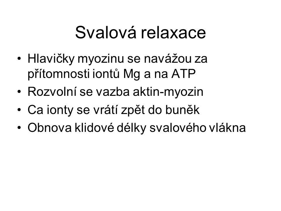 Svalová relaxace Hlavičky myozinu se navážou za přítomnosti iontů Mg a na ATP. Rozvolní se vazba aktin-myozin.
