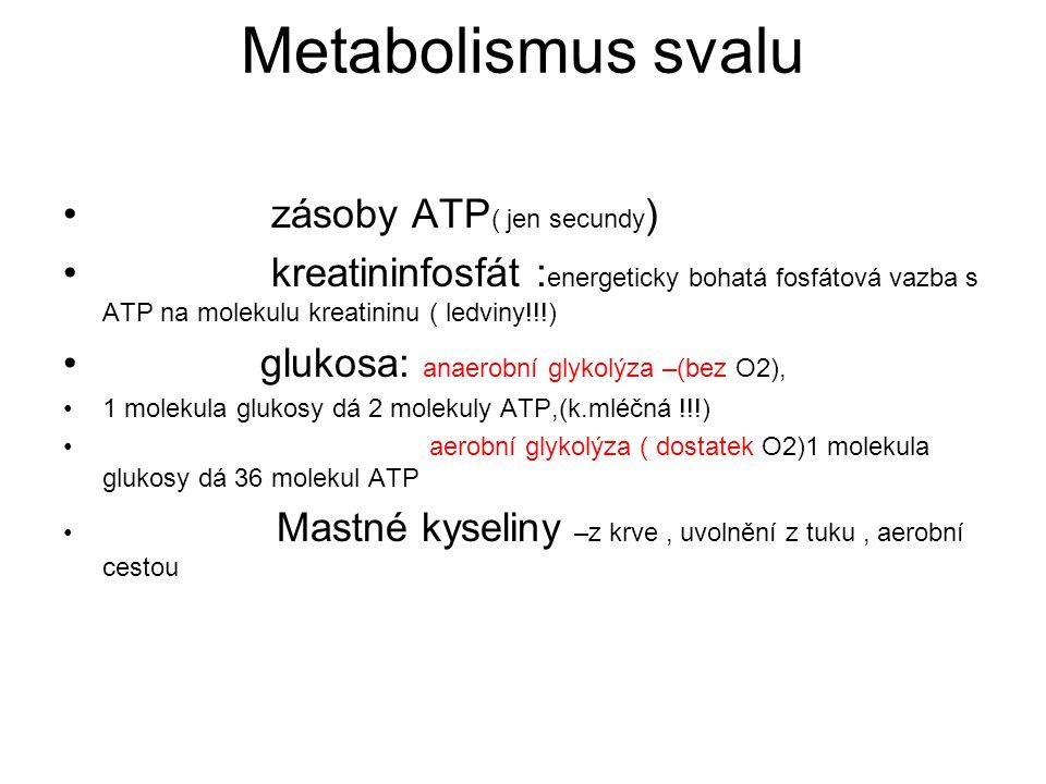 Metabolismus svalu zásoby ATP( jen secundy)